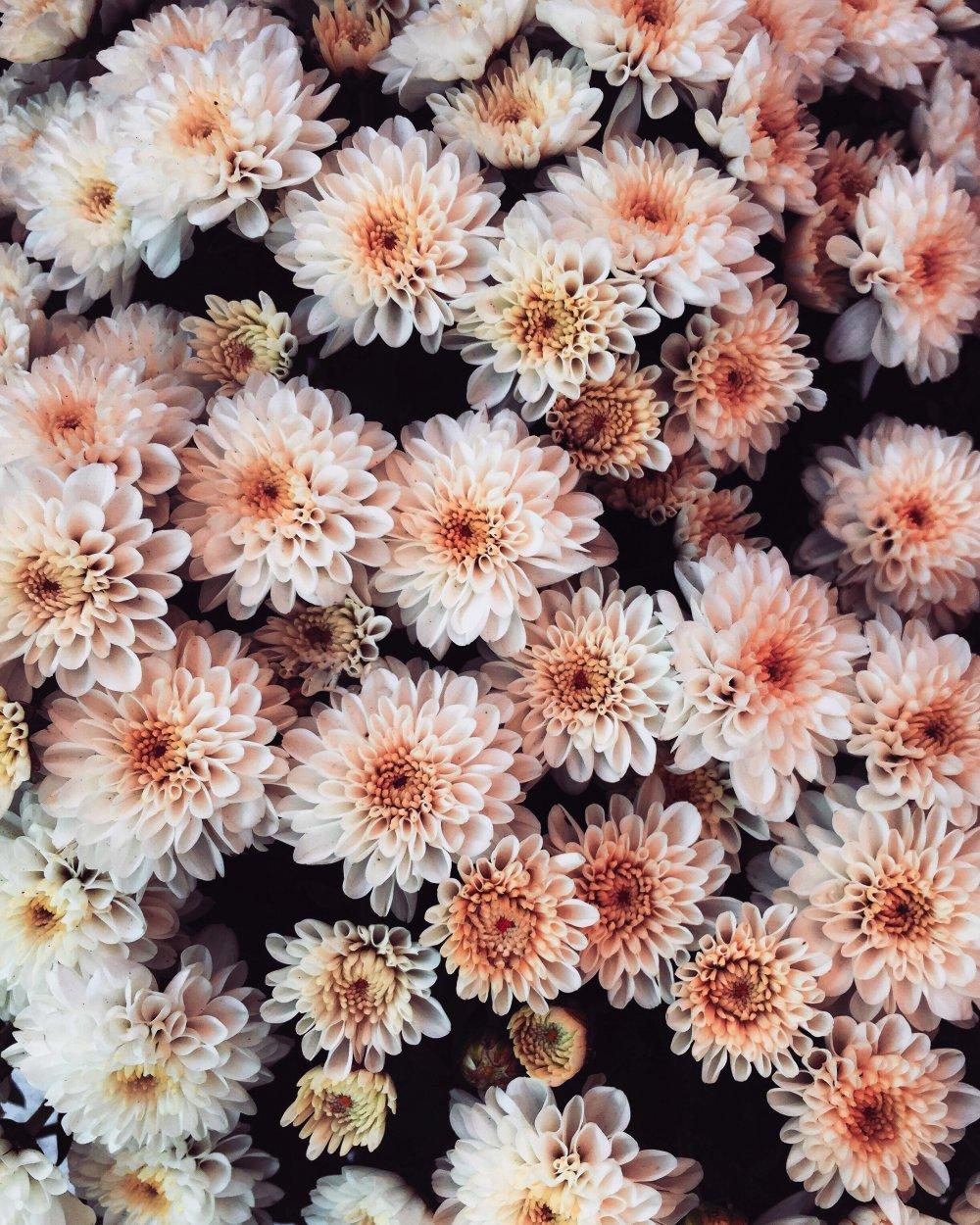 Blomster i massevis